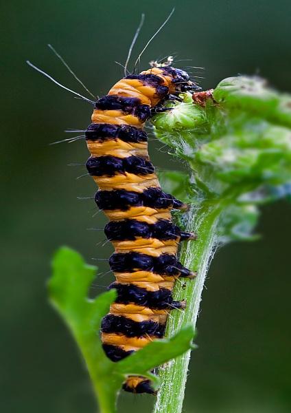 Caterpillar by gary_d