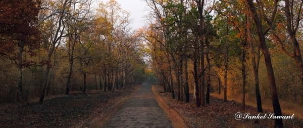 Tadoba Tiger Reserve by SanketS
