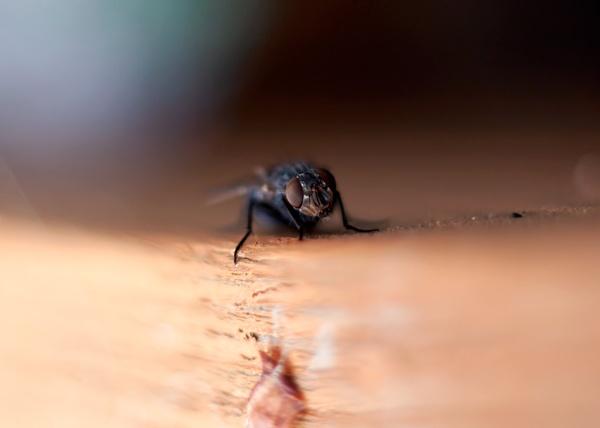 fly by HuntedDragon