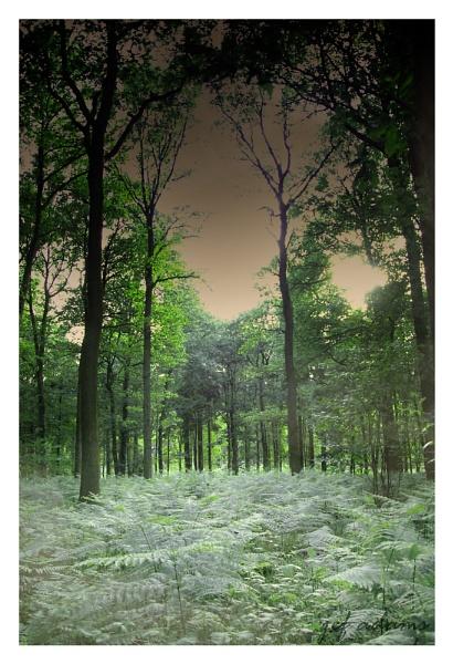 Trees by Doug1