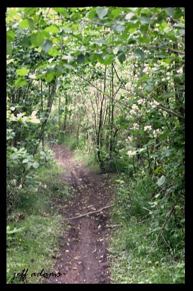 The Path by Doug1