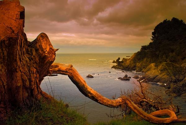Log or Ocean view by saaclick