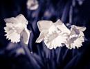 Spring in monochrome