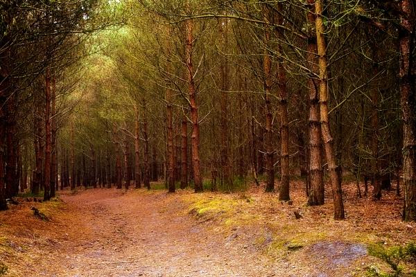 New Wavendon Heath by BigCol