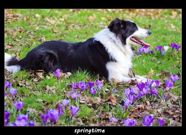 springtime by raygregson