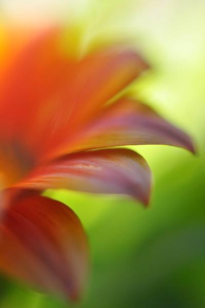 Petals by konu
