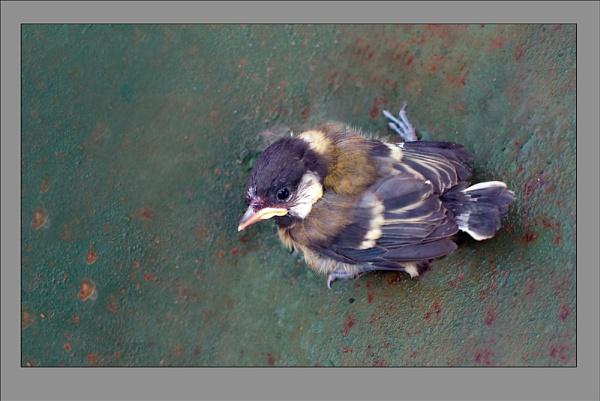 Baby bird by Jat_Riski