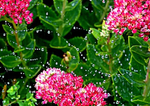 Natures Beadwork. by macroman