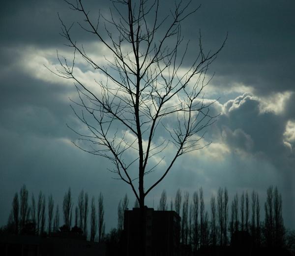 tree frame by amazin