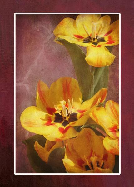 Sunny Tulips by Shellio