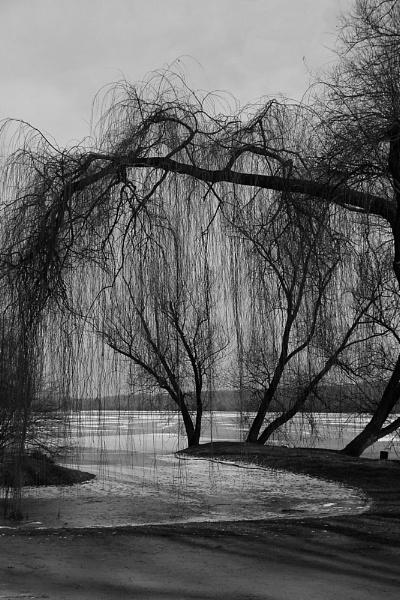 winter serenity by senn