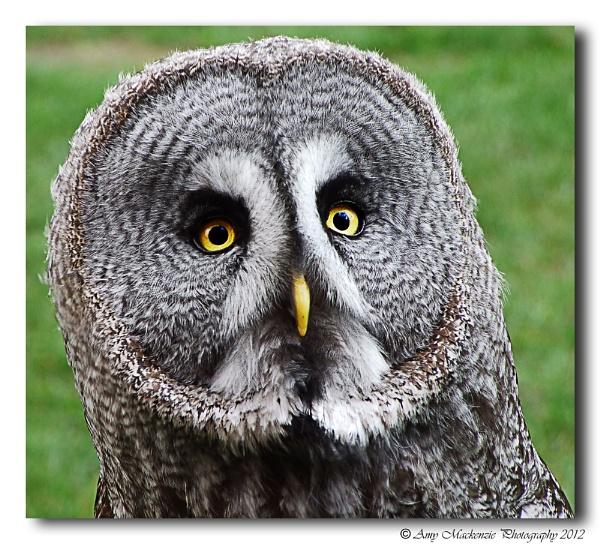 The Wise Owl by cheekyamyleigh