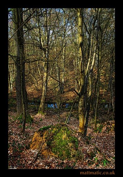 |woods| by mattmatic