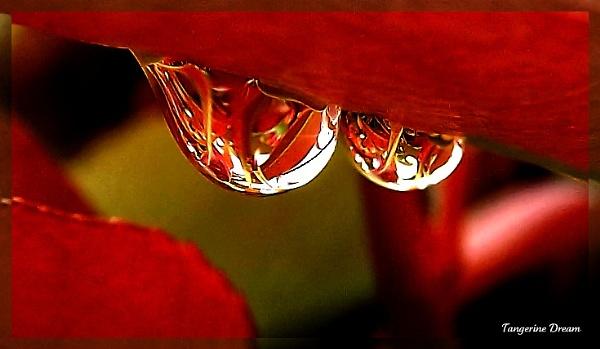 Tangerine Dream by butterflydiva72