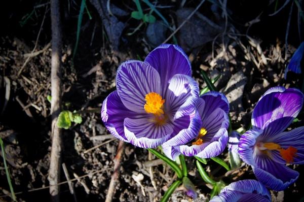 spring flower by christinecilia