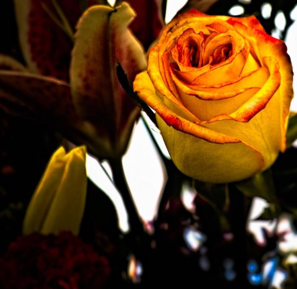 The Rose by enricopardo