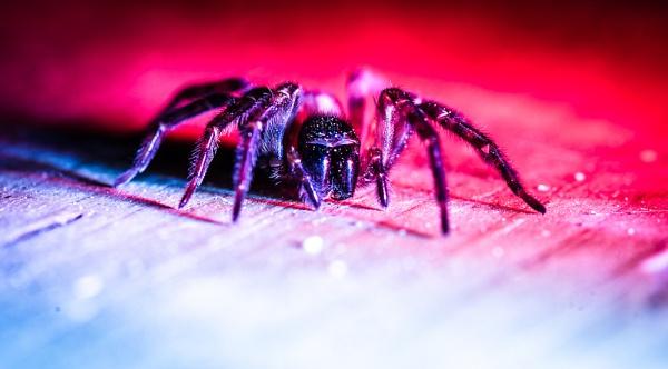 Itsy Bitsy Spider by JamesFarley