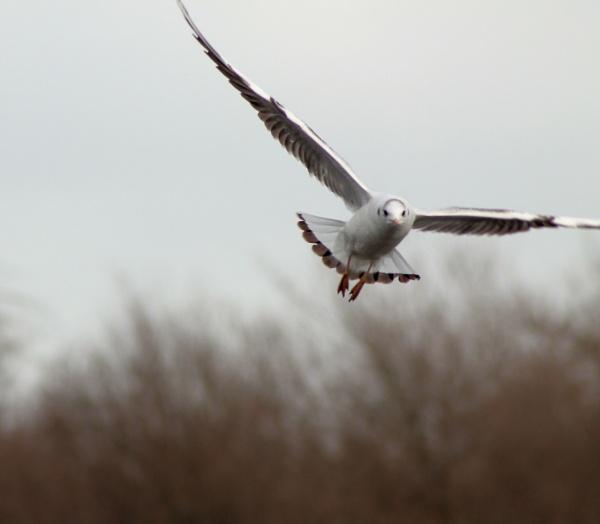 bird in flight by sandk