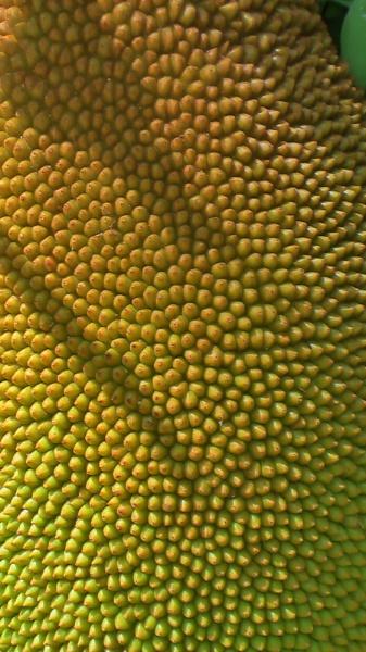 texture by emilett