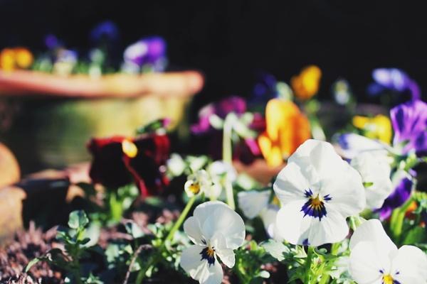 In the Garden by hannahmargerine