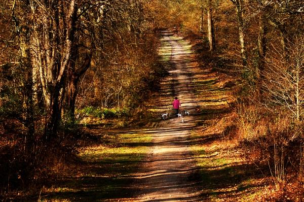 Woodland Walk by churchill123
