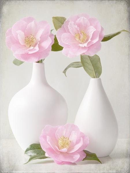 Camellias by JenniCh
