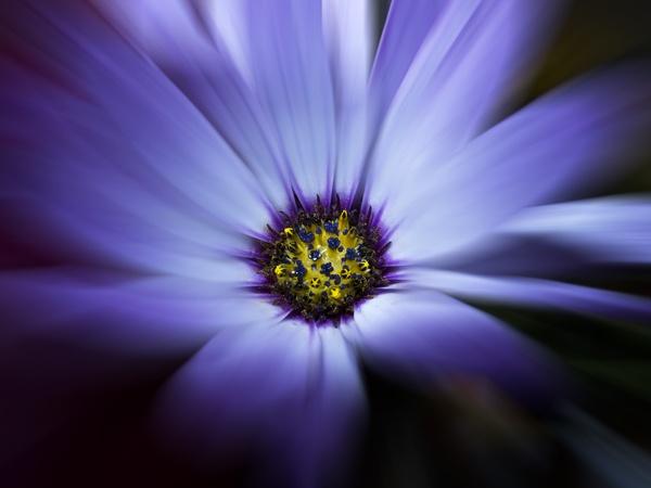 Purple Haze by DiegoDesigns