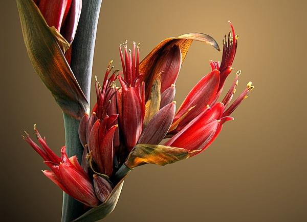 New Zealand Flax by pamelajean