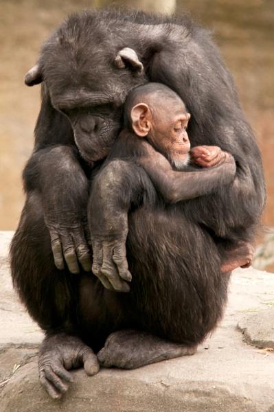 monkey mum by possumhead