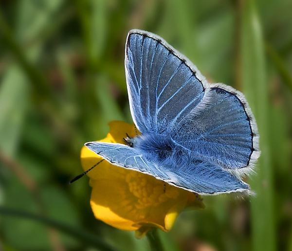 Blue by gary_d
