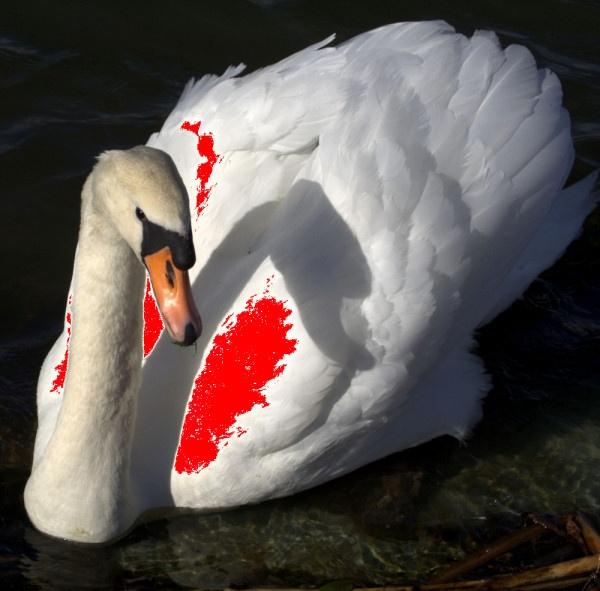 Swan by EvasiveSkydiver