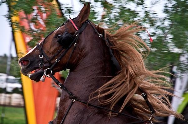 Saddle horse by Msalicat