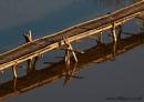 Bridge by lillypix