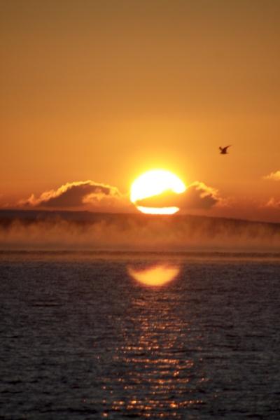 Sunrise & Seagull by Sindbad