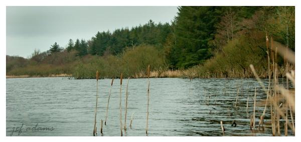 the pond by Doug1