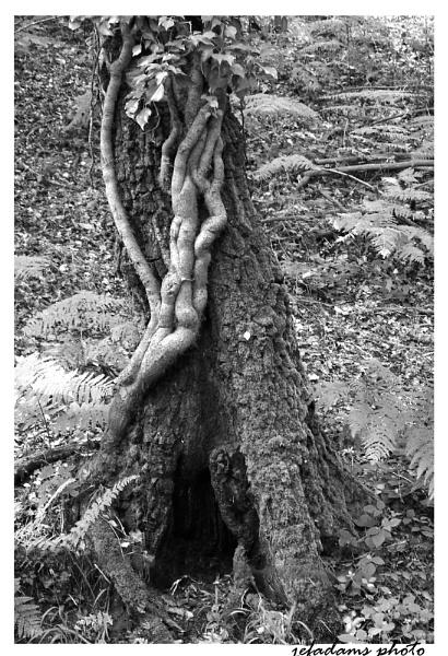 twisted vine by Doug1