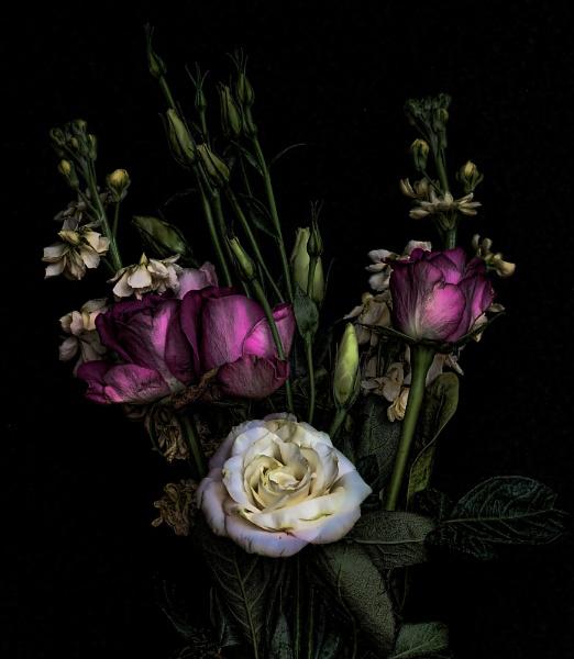 Midnight Garden by psiman