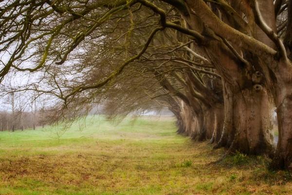 Misty Beeches by marktc
