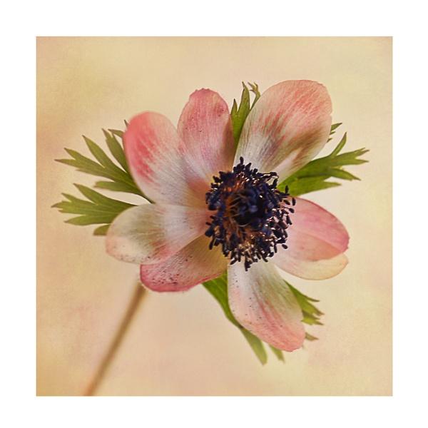 Spring Elegance by Shellio