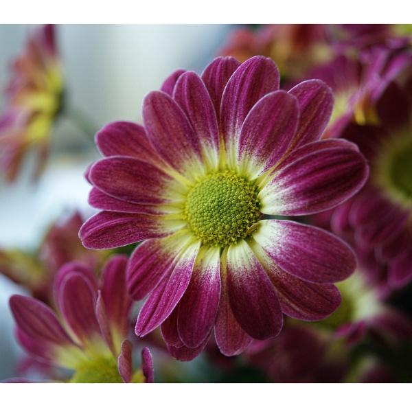 Flower Fresh by Shellio