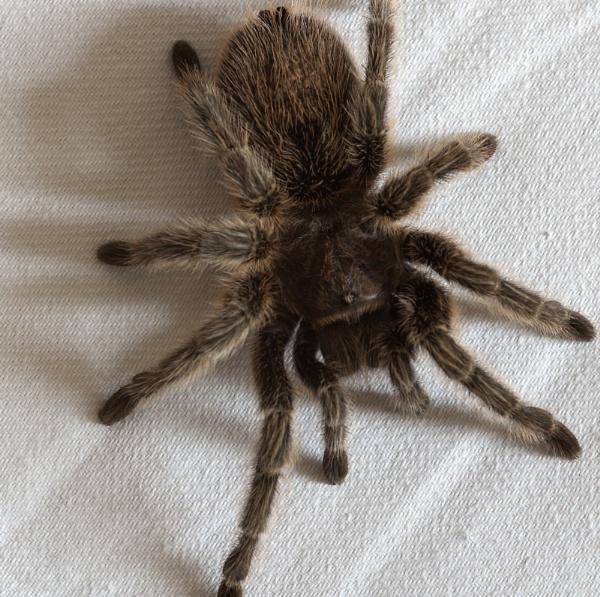 Incy Wincy Spider by tyronet2000