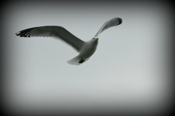 bird by lawsonwazere