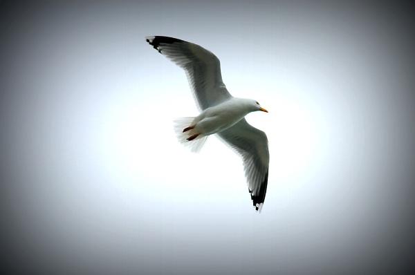 in flight by lawsonwazere