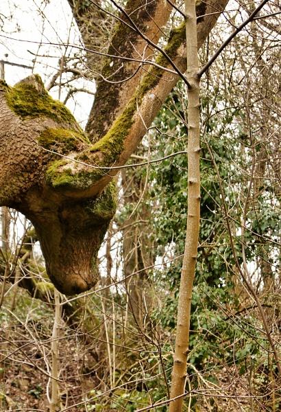 o deer its a tree by christinecilia