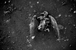 Flightless bird.