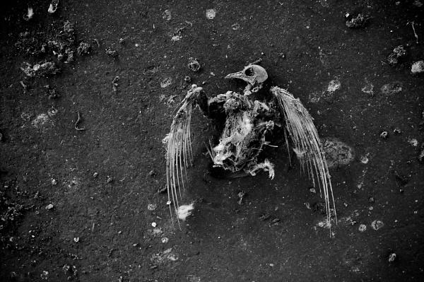 Flightless bird. by SiPickles