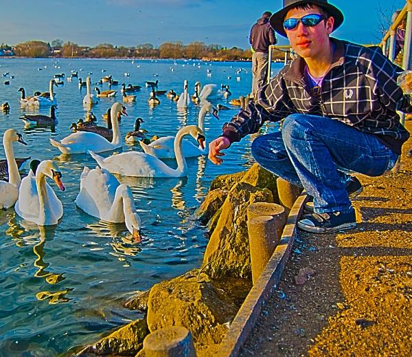 Swan feed by jka59