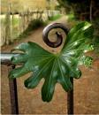 Fatsia Leaf on Gate by pamelajean
