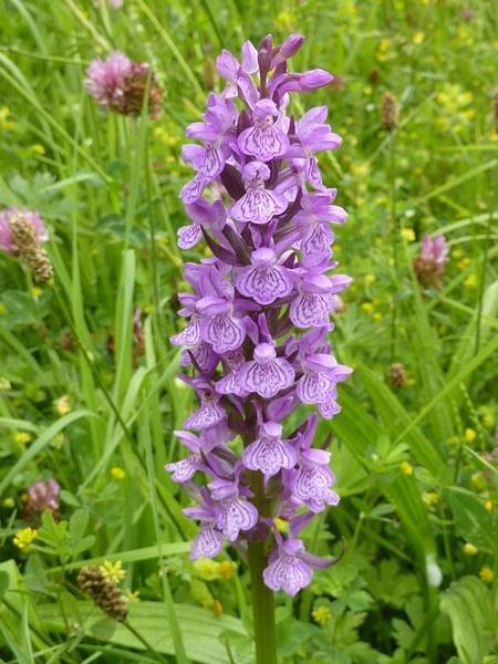 Wild Orchid by BarbaraR