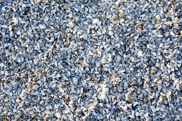 Shells by Esge